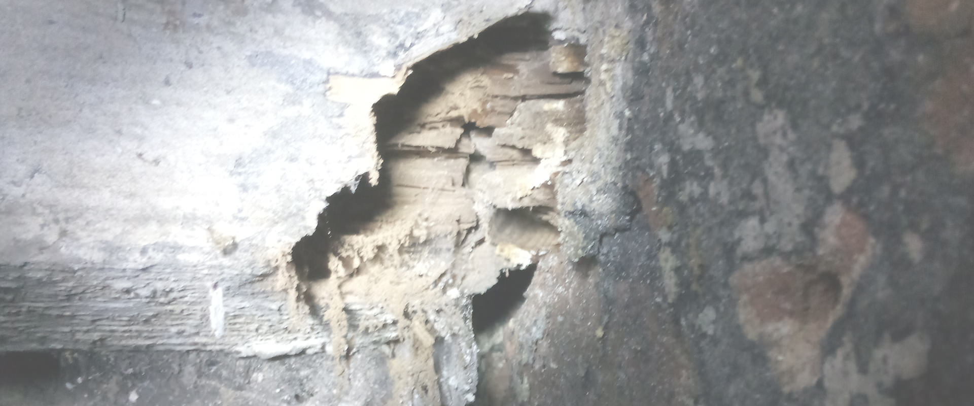 Wet & Dry Rot Liverpool